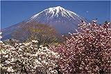 1000ピース ヤエザクラと富士山(静岡県) 10-484