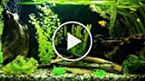 Why Is Your Fish Tank Filter Not Pumping Water?