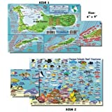 Cozumel Fish And Creature Guide Franko Laminated Maps - Fish ID And Maps Franko S Maps About 9 X 6 Snorkel Snorkeling...