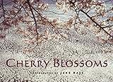 Jake Rajs Cherry Blossoms