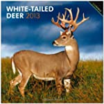 White-Tailed Deer 2013 Square 12X12 W...
