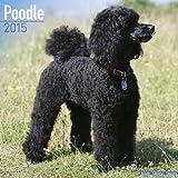 Poodle Calendar - Just Poodle Calendar - 2015 Wall calendars - Dog Calendars - Monthly Wall Calendar by Avonside
