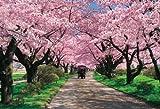 1000ピース 北上展勝地の桜並木 71-364