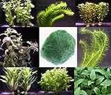 Wasserflora Anti-Algen-Set