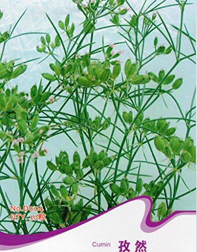 cumin-seeds-cummin-cuminum-cyminum-aromatic-herb-plants-d004