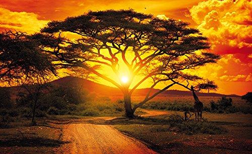 carta-da-parati-carta-da-parati-murale-foto-carta-da-parati-carta-da-parati-africa-africa-400-sfondo