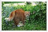 猫の太いストライプ恐怖59804のティンサイン 金属看板 ポスター / Tin Sign Metal Poster of Cat Thick Striped Fright 59804