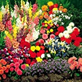 Summertime bulb garden – 100 flower bulbs
