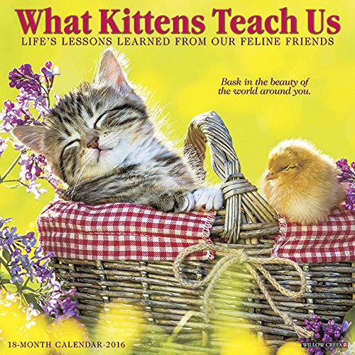 2016 What Kittens Teach Us Wall Calendar
