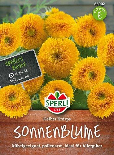 Sperli-Samen Zwerg-Sonnenblume Gelber Knirps