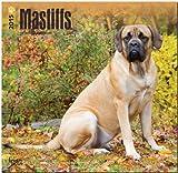 BrownTrout Publishers Ltd. Mastiffs 2015 Wall Calendar