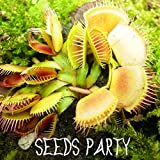 1000年PCS /パック鉢植え食虫植物種子ハエジゴクMuscipulaジャイアントクリップハエトリグサ種子食虫植物、#のWGQNEL