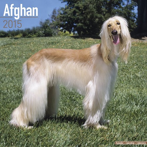 Afghan Dog Calendar - Afghan Hounds Calendar - Just Afghans Calendar - 2015 Wall calendars - Dog Calendars - Monthly Wall Calendar by Avonside