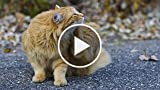 How to Treat a Cat with Fleas