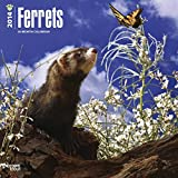 Ferrets 2014 Wall BrownTrout