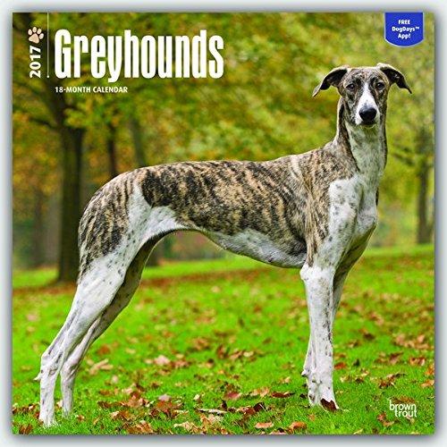 greyhounds-2017-square-wall-calendar