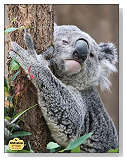 Koala Bear In A Tree Notebook - Photo of a koala bear hugging a tree provides the AWW effect for the cover of this blank and wide ruled notebook with blank pages on the left and lined pages on the right.