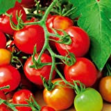 Suttons Seeds 150490 Red Alert Tomato Seed