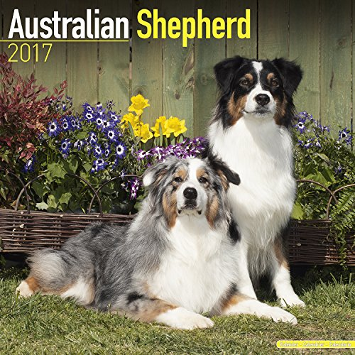 Australian Shepherd Calendar 2017 - Dog Breed Calendar - Wall Calendar 2016-2017