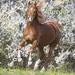 Pferde 2017 - A&I Tierkalender, Brosc...
