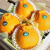 【産地直送】熊本県産 高級 デコポン 化粧箱入り 熊本が誇る至極の柑橘、本物のデコポン!! (小 ( 4玉 1.2kg前後 ))