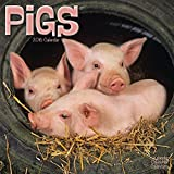 PIGS 2016 Wall Calendar (Square)