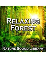 Relaxing Forest Birdsong for Serenity and Contemplation