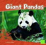 Giant Pandas (Bears)
