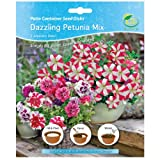 G Plants Easy Gardening Seed Mats Patio Containers Dazzling Petunia