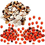 Ankita Gemstones Set Of 100 Pcs Gomti Chakra And Natural Red Gunja Red Chirmi