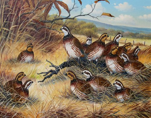 Quail by J W Thrasher: Amazon Art: Oil Paintings