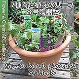 【ハーブを楽しむ】7種の寄植えハーブ・8号陶器鉢【ハーブ】【寄せ植え】