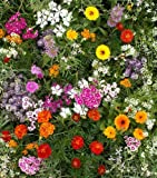 "Fragrant Flower Mix - Grow Fragrant Garden Flowers. Includes: (1) Pre-seeded  17"" x 5' Flower Seed Mat. Simply Roll out, plant and grow. Instant garden mat for flowering bushes. SEEDS OF: Celosia, delphinium, cosmos, globe amaranth, salvia, sunflowers, zinnia, marigolds and baby's breath"
