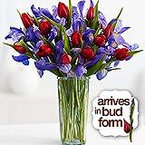 A Dozen Hugs, a Dozen Kisses Bouquet (12 Tulips, 12 Irises) - Flowers
