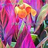 10個カンナ種子美しい花の種ミックスインディカリリーガーデン球根花屋外鉢植え盆栽フローレス植物。ホームギフト