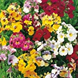 Suttons Seeds 124249 Nemesia Tapestry Mix Seed