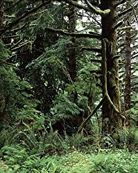 Olympic Rain Forest Photograph - Beautiful 16x20-inch Photographic Print by Carol M. Highsmith