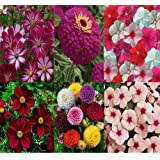 Flower Seeds Combo Of Cosmos Red/pink, Cosmos Mix, Zinnia Purple, Dahlia, Vinca Mix And Pink - 6 Pkts By Super...