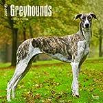 Greyhounds - Gro�er Englischer Windhu...