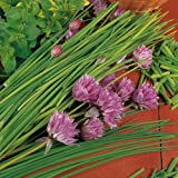 Suttons Seeds 187098 Herbs Chives Organic Seed