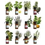 Kit aromath�rapie - Lot de 12 huiles...
