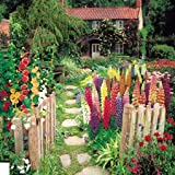 Suttons Seeds 139533 Cottage Garden Seed Collection