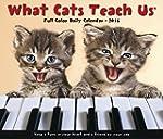 What Cats Teach Us 2016 Daily Box Cal...
