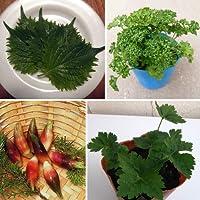 夏の香味野菜4種12株セット [青シソ・パセリ・ミョウガ・ミツバ]