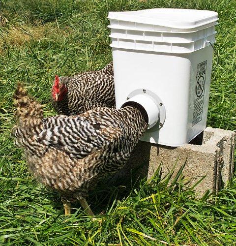 Кормушки и поилки для куриц своими руками