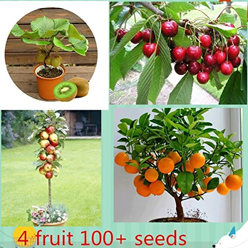 maleegrow-4-kind-of-fruit-trees-seeds-apple-cherry-kiwi-orange