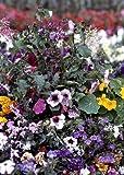 Tropica - Wildblumen - Cuba - Latin Lover (26 Sorten) - 1000 Samen