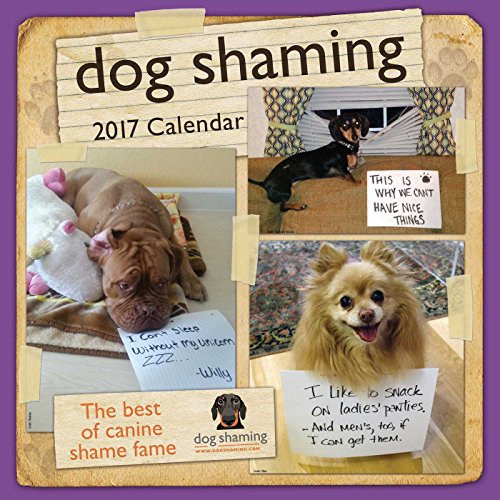 Dog Shaming 2017 Wall Calendar