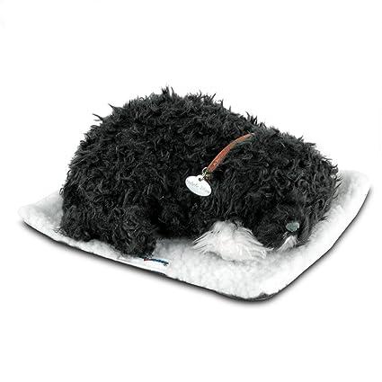 Perfect Petzzz Portuguese Water Dog
