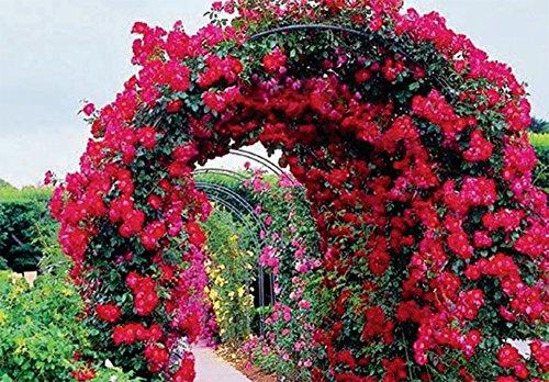 Galileo casa 2403896 arco da giardino supporto per piante for Offerte piante da giardino
